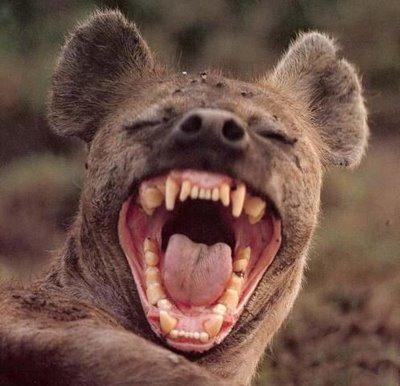 hyenne.jpg